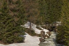 Ξύλινη γέφυρα πέρα από ρέοντας το λίγο ποταμό στην άνοιξη στο φ Στοκ εικόνα με δικαίωμα ελεύθερης χρήσης