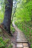 Ξύλινη δασική πορεία στοκ φωτογραφία με δικαίωμα ελεύθερης χρήσης