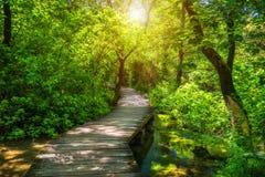 Ξύλινη διάβαση πάρκων Krka εθνική στο βαθύ - πράσινη δασική ζωηρόχρωμη θερινή σκηνή του εθνικού πάρκου Krka, Κροατία, Ευρώπη Ξύλι στοκ φωτογραφία με δικαίωμα ελεύθερης χρήσης