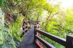 ξύλινη διάβαση πεζών στον κήπο στις πτώσεις Cheonjeyeon, νησί Jeju Στοκ Φωτογραφία