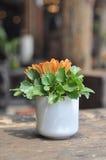 Ξύλινη επιτραπέζια διακόσμηση λουλουδιών φλυτζανιών Στοκ Εικόνες