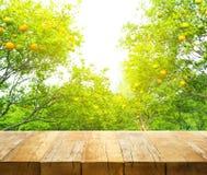 Ξύλινη επιτραπέζια κορυφή με τη θαμπάδα του πορτοκαλιού αγροκτήματος το πρωί Στοκ Εικόνες