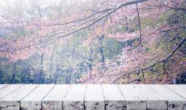 Ξύλινη επιτραπέζια κορυφή στο λουλούδι sakura θαμπάδων στο υπόβαθρο κήπων Φύση στοκ εικόνα με δικαίωμα ελεύθερης χρήσης
