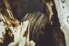 Ξύλινη κινηματογράφηση σε πρώτο πλάνο δέντρων σύστασης στοκ φωτογραφία με δικαίωμα ελεύθερης χρήσης
