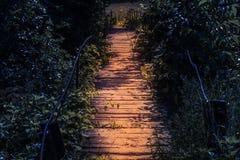 Ξύλινη κυριώτερη γέφυρα για πεζούς τη νύχτα σε μια ατμόσφαιρα παραμυθιού Διάβαση στο σκοτεινό απόκοσμο δάσος στο σεληνόφωτο στοκ εικόνα