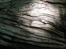 Ξύλινη λεπτομέρεια σύστασης σχεδίων φλοιών δέντρων που βλέπει από την πλευρά με στοκ εικόνες