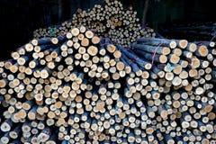 Ξύλινη ξυλεία κύκλων σύστασης για την κατασκευή Στοκ Εικόνες