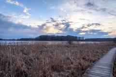 Ξύλινη πορεία κατά μήκος της λίμνης στο δάσος στο ηλιοβασίλεμα στοκ φωτογραφία με δικαίωμα ελεύθερης χρήσης