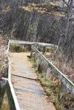 Ξύλινη πορεία περπατήματος μέσω του δάσους Στοκ φωτογραφία με δικαίωμα ελεύθερης χρήσης