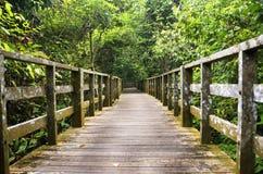 Ξύλινη πορεία περπατήματος ξυλείας στη ζούγκλα Sabah, Μπόρνεο Στοκ εικόνα με δικαίωμα ελεύθερης χρήσης
