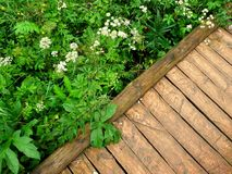 Ξύλινη πορεία στη φύση Στοκ Εικόνες