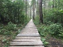 Ξύλινη πορεία στο ξύλο Στοκ εικόνες με δικαίωμα ελεύθερης χρήσης