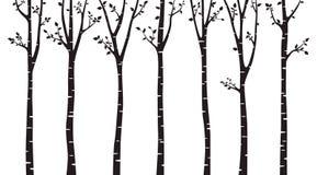 Ξύλινη σκιαγραφία δέντρων σημύδων στο άσπρο υπόβαθρο απεικόνιση αποθεμάτων