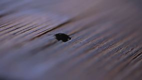 Ξύλινη σύσταση - εστίαση - εκλεκτής ποιότητας ξύλινο γραφείο σχεδίου απόθεμα βίντεο
