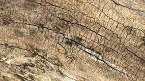 Ξύλινη σύσταση κούτσουρων Στοκ φωτογραφία με δικαίωμα ελεύθερης χρήσης