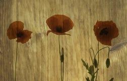 Ξύλινη σύσταση με τις παπαρούνες Στοκ εικόνα με δικαίωμα ελεύθερης χρήσης