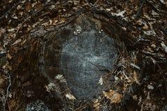 Ξύλινη σύσταση του κυματιστού σχεδίου δαχτυλιδιών από μια φέτα του δέντρου Το Grayscale σπατάλησε το ξύλινο κολόβωμα στοκ εικόνα με δικαίωμα ελεύθερης χρήσης