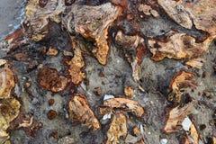 Ξύλινη σύσταση του παλαιού σάπιου παχιού βαρελιού στοκ φωτογραφίες