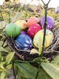 Ξύλινη φωλιά πουλιών αυγών Πάσχας Στοκ Εικόνα
