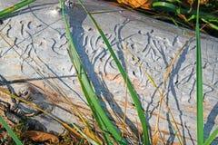 Ξύλινη χάραξη εντόμων Στοκ φωτογραφία με δικαίωμα ελεύθερης χρήσης