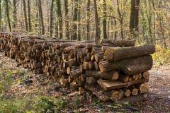 Ξύλινοι κορμοί αποθεμάτων κούτσουρων δέντρων πυρκαγιάς που συσσωρεύονται επάνω στοκ φωτογραφίες
