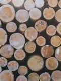Ξύλινοι κορμοί κούτσουρων περικοπών κινηματογραφήσεων σε πρώτο πλάνο Φυσικοί πόροι για το καυσόξυλο, την ενέργεια και κ.λπ. Στοκ Φωτογραφία