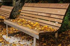 Ξύλινοι πάγκοι σε ένα πάρκο με το κίτρινο φύλλωμα το φθινόπωρο Σκηνή φθινοπώρου Στοκ φωτογραφίες με δικαίωμα ελεύθερης χρήσης