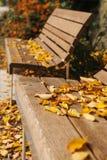 Ξύλινοι πάγκοι σε ένα πάρκο με το κίτρινο φύλλωμα το φθινόπωρο Σκηνή φθινοπώρου Στοκ Εικόνες