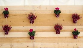 Ξύλινος αγροτικός τοίχος που διακοσμείται με τα ιώδη λουλούδια σε δοχείο στοκ εικόνες