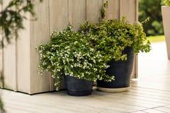Ξύλινος εκλεκτής ποιότητας τοίχος και μεγάλο δοχείο λουλουδιών στο προαύλιο κήπων Patio έξω από τα στοιχεία διακοσμήσεων Μεγάλο δ Στοκ εικόνα με δικαίωμα ελεύθερης χρήσης