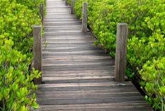 Ξύλινος θαλάσσιος περίπατος στο δονούμενο πράσινο ινδικό μαγγρόβιο ή το κεντρισμένο δάσος μαγγροβίων της Ταϊλάνδης Στοκ εικόνες με δικαίωμα ελεύθερης χρήσης