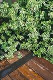 Ξύλινος πάγκος με το πράσινο φυτό φύλλων στοκ εικόνες