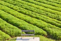 Ξύλινος πάγκος πάρκων με το υπόβαθρο του κινεζικού τομέα βίκου γάλακτος στην ανατολή στοκ εικόνα