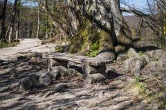 Ξύλινος πάγκος σε ένα βαθύ δάσος και ένα μονοπάτι που οδηγούν μακριά Στοκ Εικόνες