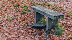 Ξύλινος πάγκος φθινοπώρου στοκ εικόνες