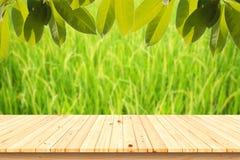 Ξύλινος πίνακας με το πράσινο αυτί του ρυζιού στον τομέα ρυζιού ορυζώνα στο θολωμένο υπόβαθρο στοκ εικόνες