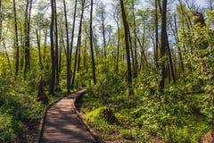 Ξύλινος πορεία, τρόπος ή διάβαση πεζών, διαδρομή από τις σανίδες στο δασικό πάρκο στο φως ήλιων, έννοια θερινού ταξιδιού Στοκ φωτογραφία με δικαίωμα ελεύθερης χρήσης