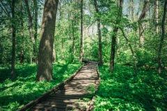 Ξύλινος πορεία, τρόπος ή διάβαση πεζών, διαδρομή από τις σανίδες στο δασικό πάρκο στο φως ήλιων, έννοια θερινού ταξιδιού Στοκ Φωτογραφία