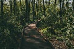 Ξύλινος πορεία, τρόπος ή διάβαση πεζών, διαδρομή από τις σανίδες στο δασικό πάρκο στο φως ήλιων, έννοια θερινού ταξιδιού, προοπτι Στοκ Εικόνες