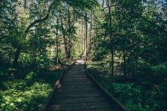 Ξύλινος πορεία, τρόπος ή διάβαση πεζών, διαδρομή από τις σανίδες στο δασικό πάρκο στο φως ήλιων, έννοια θερινού ταξιδιού, προοπτι Στοκ εικόνα με δικαίωμα ελεύθερης χρήσης