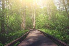 Ξύλινος πορεία, τρόπος ή διάβαση πεζών, διαδρομή από τις σανίδες στο δασικό πάρκο στο φως ήλιων, έννοια θερινού ταξιδιού, προοπτι Στοκ Φωτογραφίες