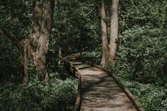 Ξύλινος πορεία, τρόπος ή διάβαση πεζών, διαδρομή από τις σανίδες στο δασικό πάρκο Στοκ φωτογραφία με δικαίωμα ελεύθερης χρήσης