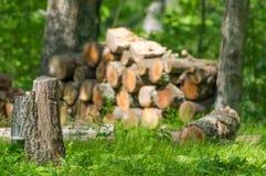 Ξύλινος σωρός στο δάσος με το κολόβωμα δέντρων στο πρώτο πλάνο - κομμένο ξύλο για τις πυρκαγιές και τη θερμότητα στοκ εικόνες με δικαίωμα ελεύθερης χρήσης