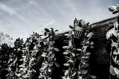 Ξύλινος τοίχος με τα πράσινα φύλλα στο μίνι δοχείο, τον πίσω και άσπρο τόνο Στοκ φωτογραφία με δικαίωμα ελεύθερης χρήσης