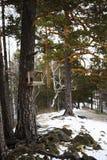 Ξύλινος τροφοδότης για τα πουλιά το χειμώνα στο κωνοφόρο δέντρο Στοκ εικόνα με δικαίωμα ελεύθερης χρήσης
