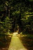 Ξύλινος τρόπος περιπάτων γεφυρών μέσω του δάσους Στοκ εικόνα με δικαίωμα ελεύθερης χρήσης
