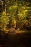 Ξύλινος τρόπος περιπάτων γεφυρών μέσω του δάσους Στοκ φωτογραφία με δικαίωμα ελεύθερης χρήσης