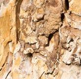 Ξύλινος φλοιός Sedin Στοκ εικόνες με δικαίωμα ελεύθερης χρήσης