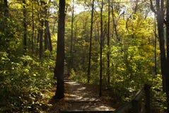 Ξύλινο ίχνος μέσω των ξύλων που οδηγούν στα σκαλοπάτια που περιβάλλονται από τα ψηλά πράσινα δέντρα και στις δύο πλευρές μια ηλιό στοκ εικόνα