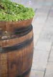 Ξύλινο βαρέλι με τα φυτά Στοκ Εικόνες